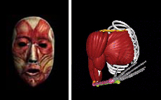 Depictions of the muscles of the face and right arm/shoulder