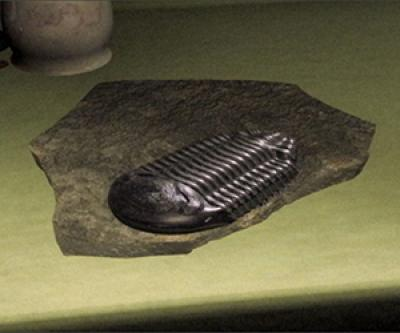 Still from the film of a fossil-like object sitting on a countertop