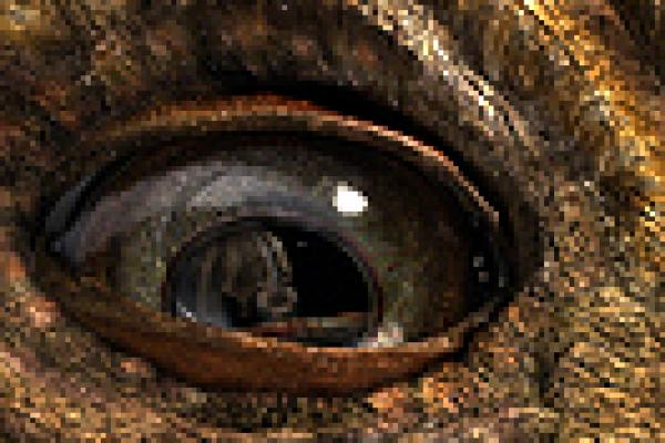 Digital dinosaur eye